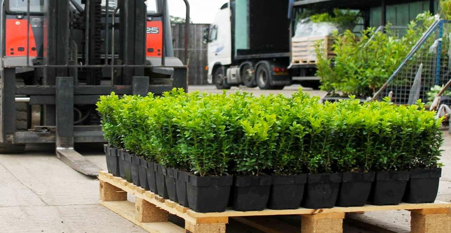 Сборная доставка растений из Европы