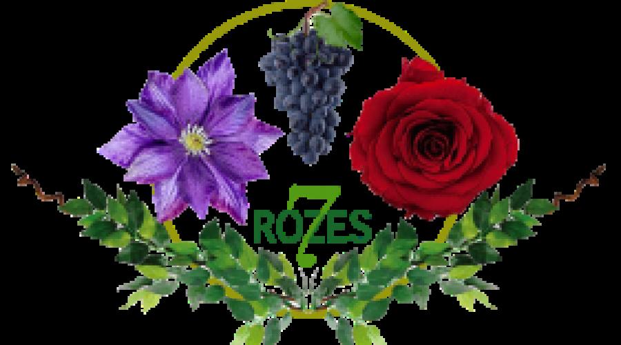 7 Rozes
